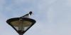 Aufmüpfiger Vogel